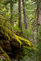 forest, glacier, moss, national, park