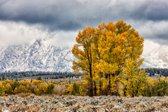 autumn, aspens, colorful, grand teton, national park, mountains, clouds, landscape, wyoming